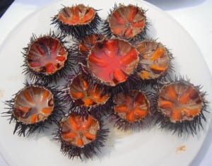 Fresh sea urchins harvested by divers along the Adriatic Coast